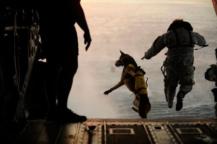 service-dogs-loyalty-military-police-101-58b4170c2a1fb__605