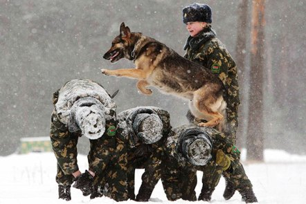 service-dogs-loyalty-military-police-102-58b4184c77a73__605