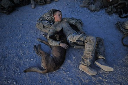 service-dogs-loyalty-military-police-116-58b42204941e4__605