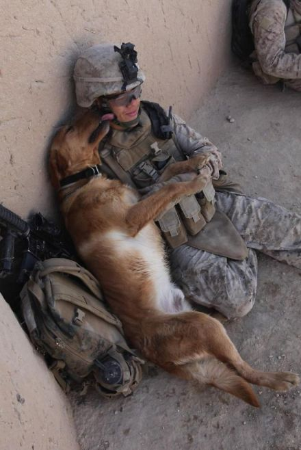 service-dogs-loyalty-military-police-19-58b03a181ff98__605