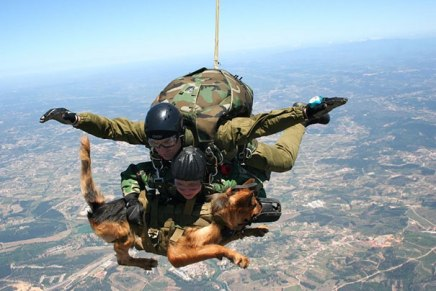 service-dogs-loyalty-military-police-2-58b039f153ffc__605
