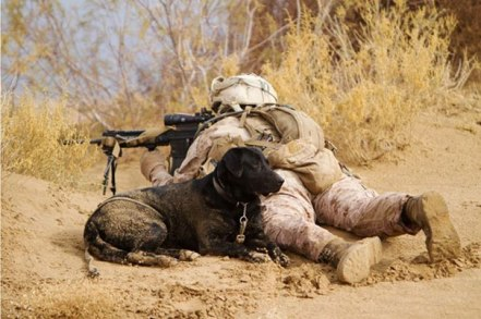 service-dogs-loyalty-military-police-41-58b42ca67b389__605