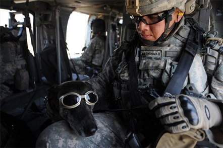 service-dogs-loyalty-military-police-67-58b440059d8b5__605
