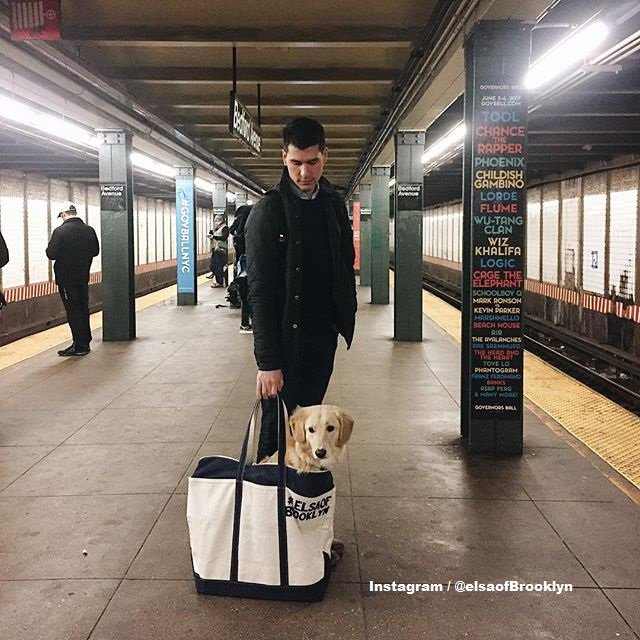 Dog Bags Nyc Subway The Best Bag - Nyc subway bans dogs unless fit bag new yorkers reacted